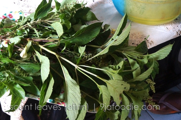 Scent Leave - Efirin - ntong - nchaun - inchaun - african - blue - basil - vegetable - soup - nigerian